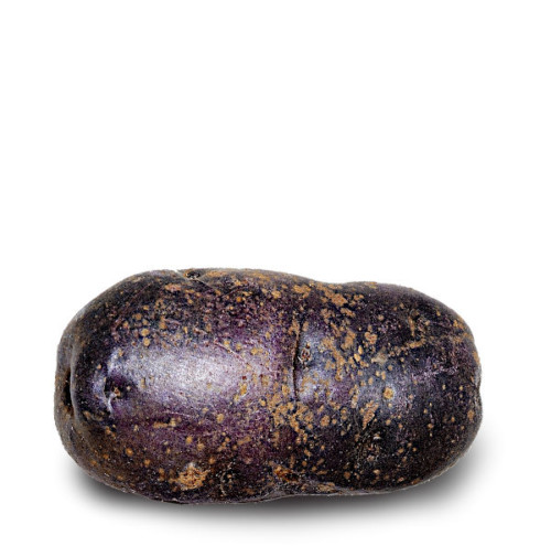 Potetsorten Blå Congo