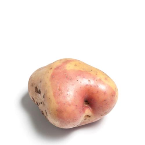 Potetsorten Rosenpotet