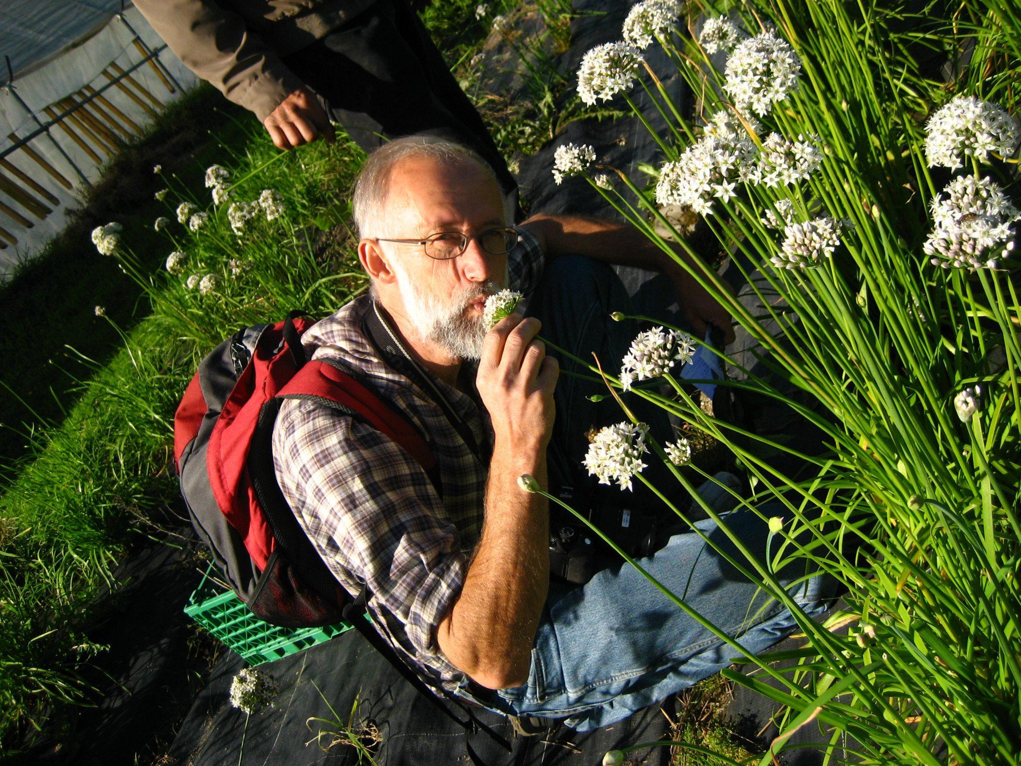 Om Allium / mat og pryd jorda rundt