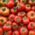Gruppelogoen til Tomat